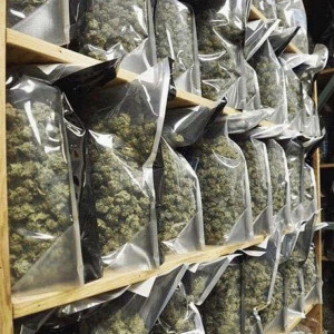 Photo for classified ad Best Quality Top Shelf's  Medical Marijuana strains available in stock.